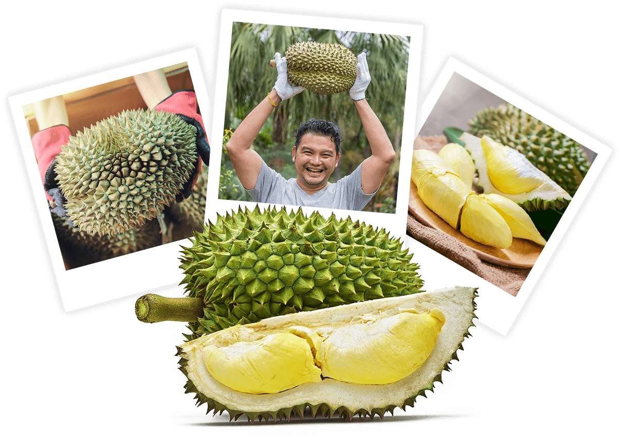 Creamier & Tastier Durians For Everyone
