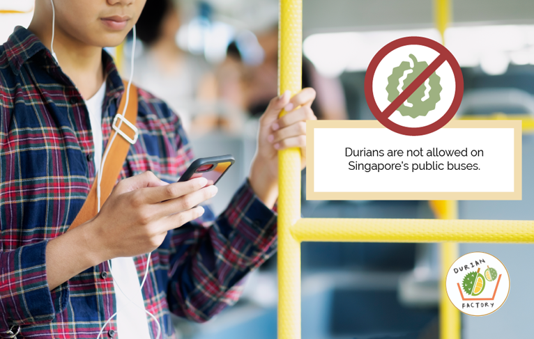 durian not allowed in Singapore's public buses