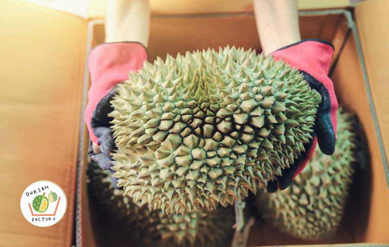 durian online delivery service
