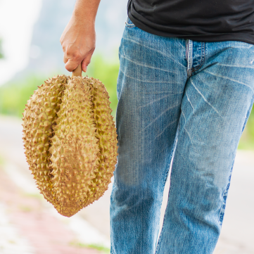fun facts about durian in Singapore