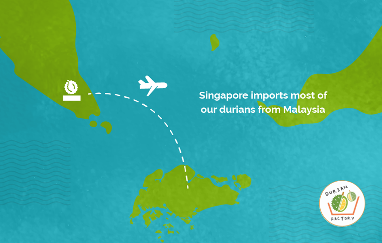 importing durian to Singapore