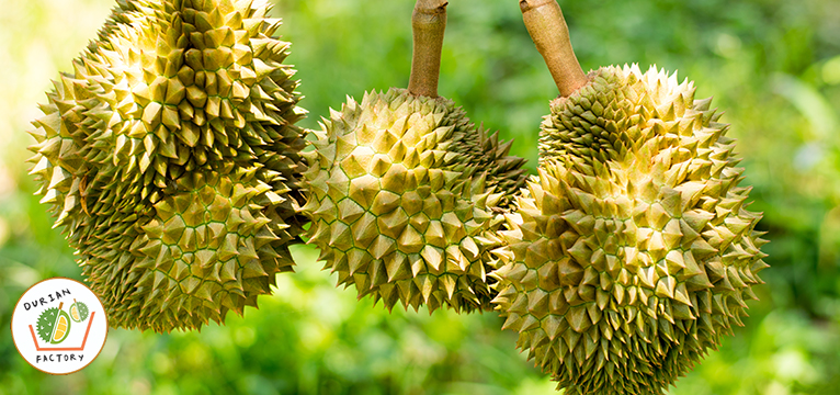 The King of Fruits. Best Durian in Singapore