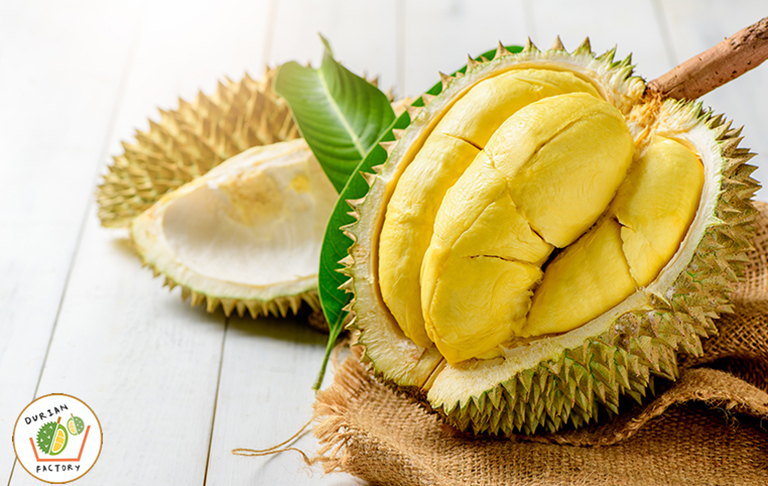 Durian Factory in Singapore