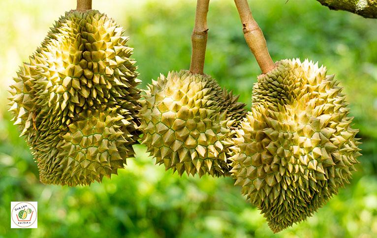 Fresh Durian In Singapore